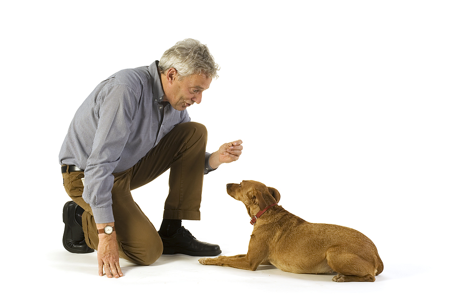 Old Dog Being Taught New Tricks bigstock_Obedience_Lay_Down_2126044